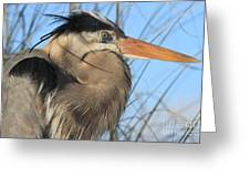 Great Blue Up Close Greeting Card