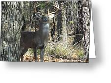 Great Buck Greeting Card