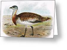 Great Bustard Greeting Card