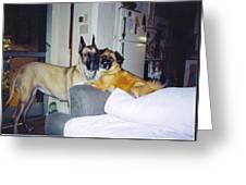 Great Dane And Australian Shepardd Greeting Card