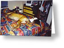 Great Dane And Cat Greeting Card
