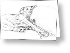 Great Dane Dog Sketch Bella Greeting Card