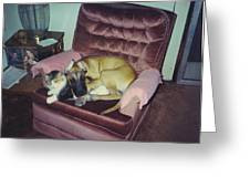 Great Dane Pup And Cat Greeting Card