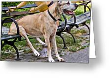 Great Dane Sitting On Park Bench Greeting Card
