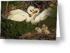 Great Egret 2am-7177 Greeting Card