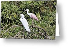Great Egret And Roseate Spoonbill Greeting Card