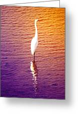 Great Egret At Sundown  Greeting Card
