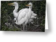 Great Egret Chicks Greeting Card by Hazel Billingsley