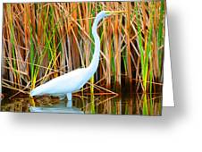 Great Egret Greeting Card