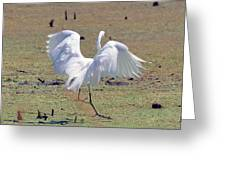 Great Egret Dancing In Auroraville Greeting Card