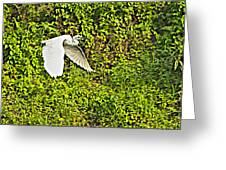 Great Egret Flying Over Rapti River In Chitwan Np-nepal Greeting Card