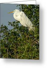Great Egret In A Tree Greeting Card