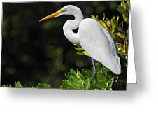 Great Egret In The Florida Everglades Greeting Card