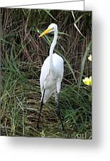 Great Egret In The Green Greeting Card