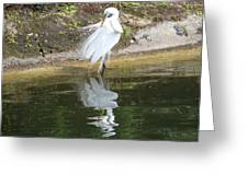 Great Egret In The Lake Greeting Card