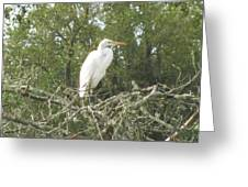 Great Egret Lookout Greeting Card