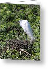 Great Egret Nest Greeting Card