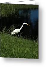 Great Egret Next To A Lake Greeting Card