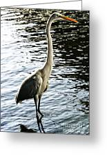 Great Egret No. 2 Greeting Card