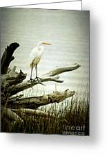 Great Egret On A Fallen Tree Greeting Card by Joan McCool
