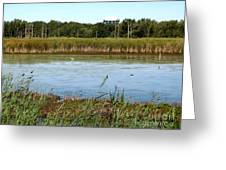 Great Egret On Berm Pond At Tifft Nature Preserve Buffalo New York Greeting Card