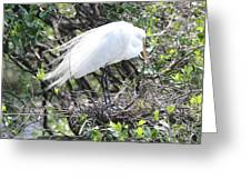 Great Egret On Nest Greeting Card