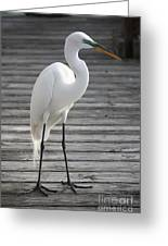 Great Egret On The Pier Greeting Card