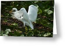 Great Egret Pose Greeting Card