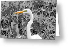Great Egret Poster Greeting Card