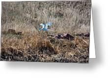 Great Egret Takes Flight Greeting Card