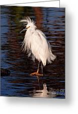 Great Egret Walking On Water Greeting Card