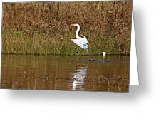Great Egret Wing Water Reflections 3 Greeting Card