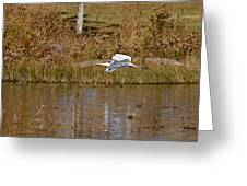 Great Egret Wing Water Reflections Greeting Card