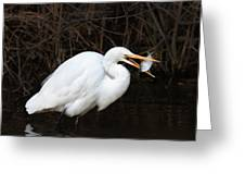 Great Egret With Big Fish Greeting Card
