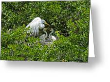 Great Egret With Chicks On The Nest Greeting Card