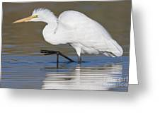 Great Egret With Leg Up Greeting Card