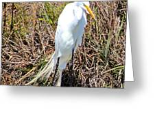 Great Egret1 Greeting Card