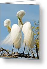 Great Egrets At Nest Greeting Card