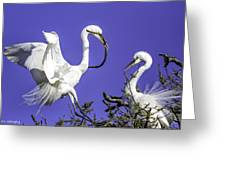 Great Egrets Nesting Greeting Card