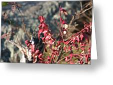 Great Falls Va - 121224 Greeting Card by DC Photographer