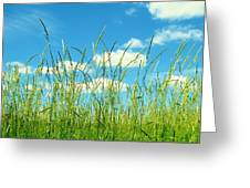 Great Fields Greeting Card