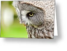 Great Gray Owl Close Up Greeting Card