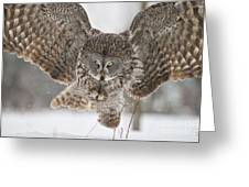 Great Gray Owl Pictures 634 Greeting Card