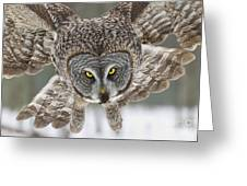 Great Gray Owl Pictures 648 Greeting Card