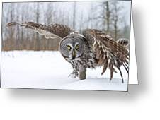 Great Gray Owl Pictures 658 Greeting Card