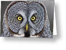 Great Gray Owl Pictures 680 Greeting Card