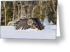 Great Gray Owl Pictures 740 Greeting Card