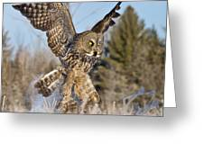 Great Gray Owl Pictures 767 Greeting Card
