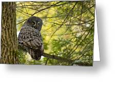 Great Gray Owl Pictures 779 Greeting Card