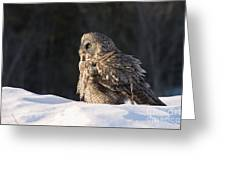 Great Gray Owl Pictures 788 Greeting Card